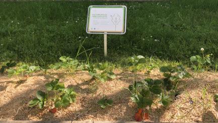 Récoltes des Jardins partagés de Thônex
